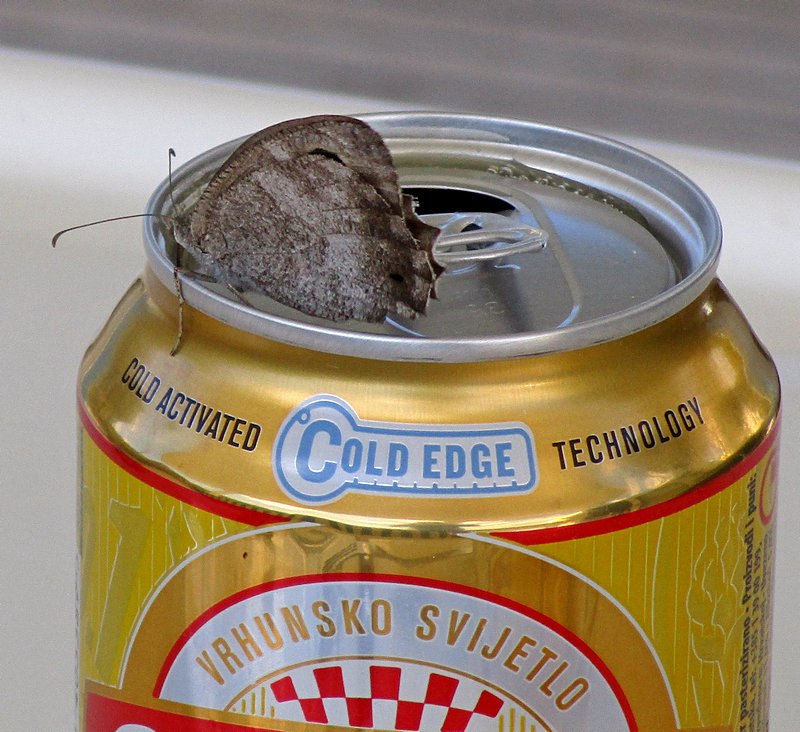 butterfly on the beer